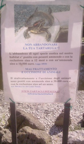 animalisti, Via Garibaldi, tartarughe