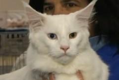 gatto-fiera.jpg